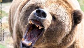 """Unter dem Label """"Mai mit Biss"""" widmet sich der Doku-Sender National Geographic Wild in diesem Monat täglich verschiedensten Tieren, die wahre Meister im Zubeißen sind. (Foto: National Geographic Wild/iStockphoto.com/Justin Horrocks)"""