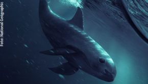 """Am 2. Mai zeigt National Geographic die preisgekrönte Doku """"Sea of Shadows"""" des Österreichers Richard Ladkani über die Rettung der Vaquita, der seltensten Wale der Welt. In dem von Leonardo DiCaprio produzierten Film geht's auch um die Machenschaften mexikanischer Drogenkartelle und chinesischer Mafia. (Foto: National Geographic)"""