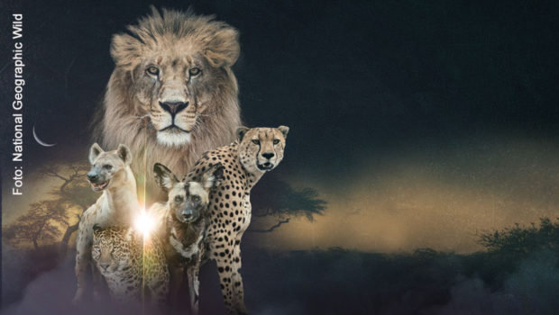 Foto: National Geographic Wild